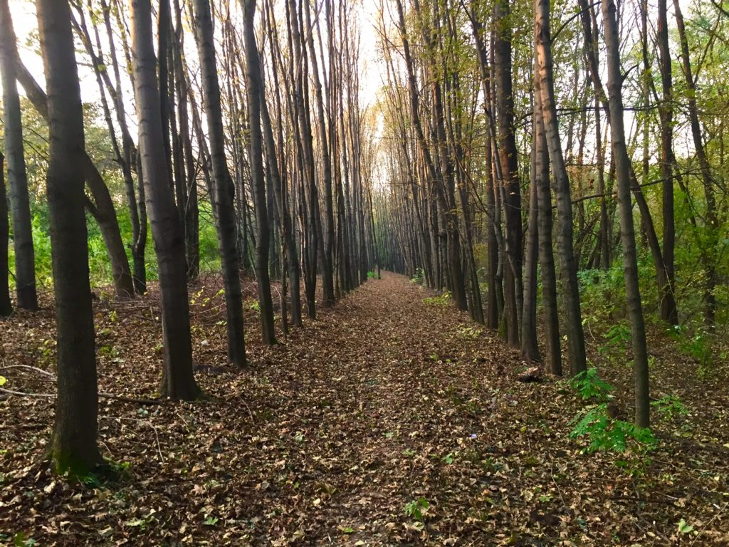 No matter how difficult life gets, I always enjoy this stretch of woods by our house.